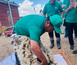 The ProValue project organized an electric shearing training for herders in 6 soums of Arkhangai aimag as part of the ProValue project activities